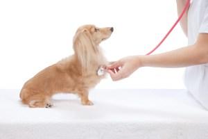 犬のリハビリ