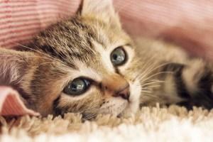 猫の目ヤニ対策