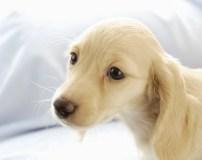 犬の皮膚病や被毛トラブル