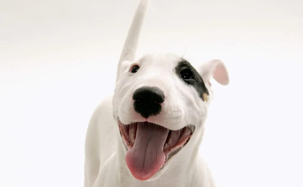 犬の無駄吠えの原因を探る