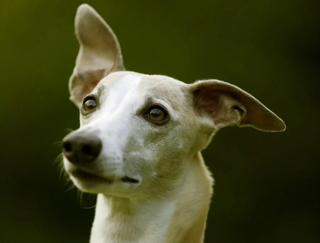 犬の乾燥肌対策