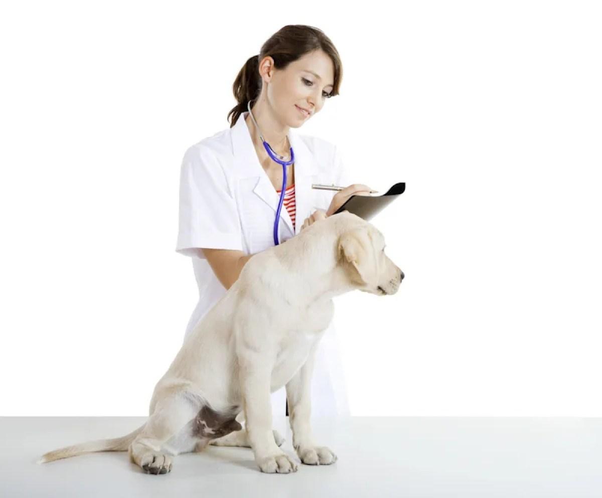 犬 医者 獣医