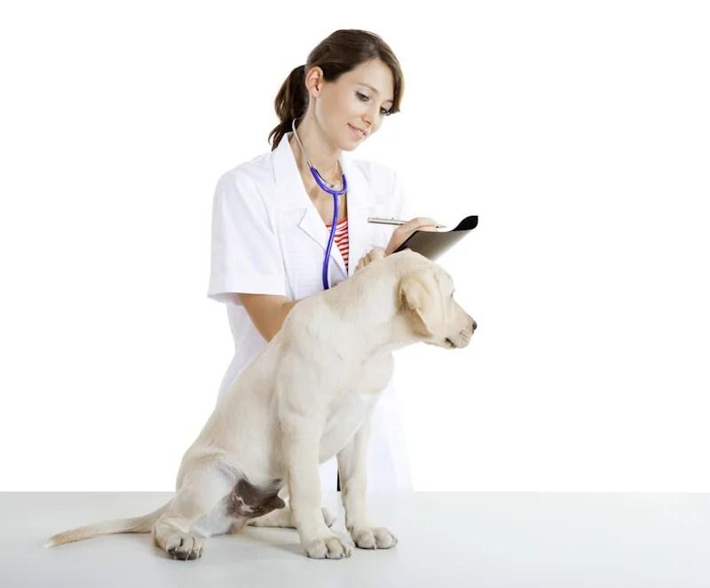 犬・ペットの皮膚病・皮膚炎対策「湿疹」編