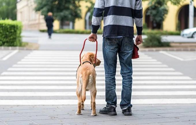 盲導犬が赤信号で止まれるワケ