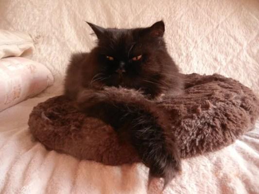 猫の運動不足問題