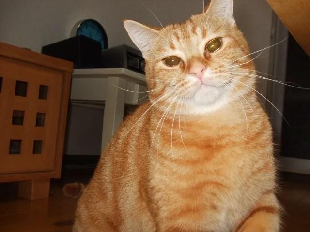 猫の歯磨き必要性