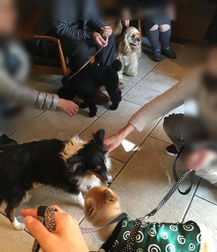 スタバ代沢5丁目店 犬同伴飼い主の社交場