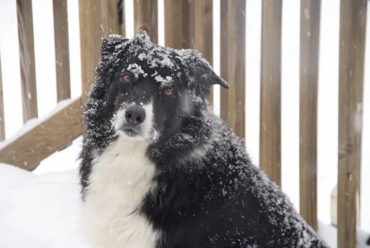 雪の日の犬の散歩