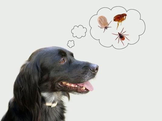 秋冬の犬のノミダニ問題