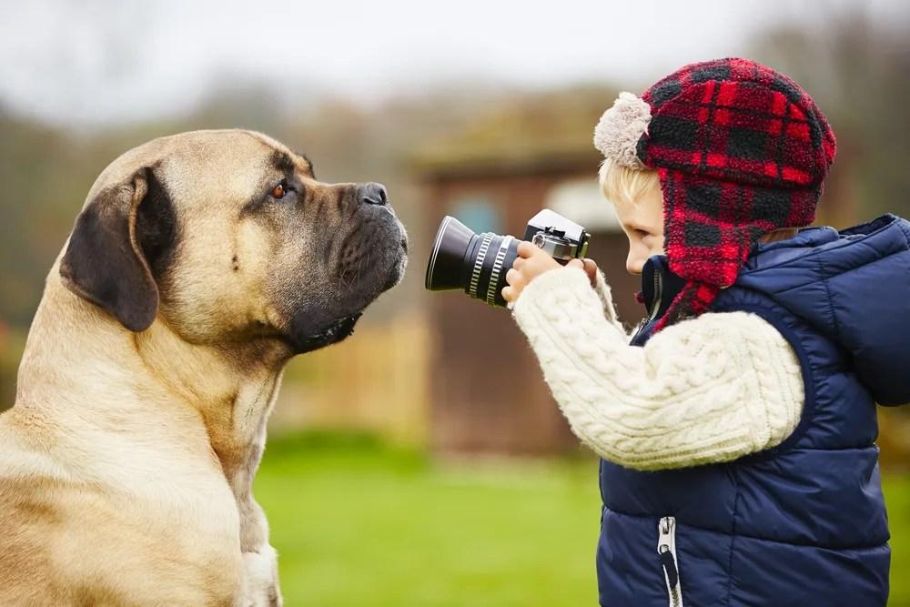 犬のカメラ目線撮影