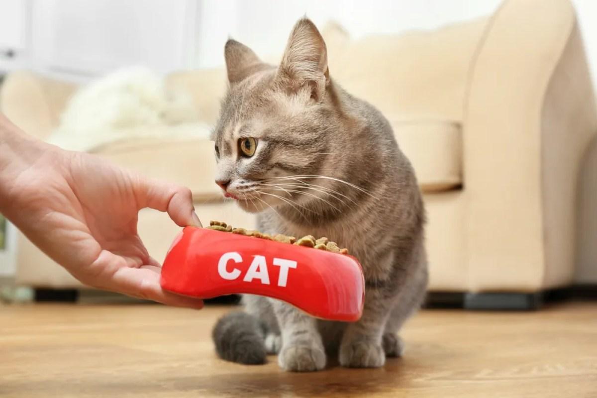 猫 餌 餌入れ