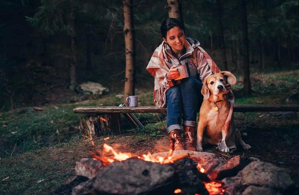 犬と一緒にキャンプに行くときはハーネス着用