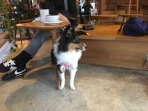 スタバ駒沢1丁目店 犬カフェ