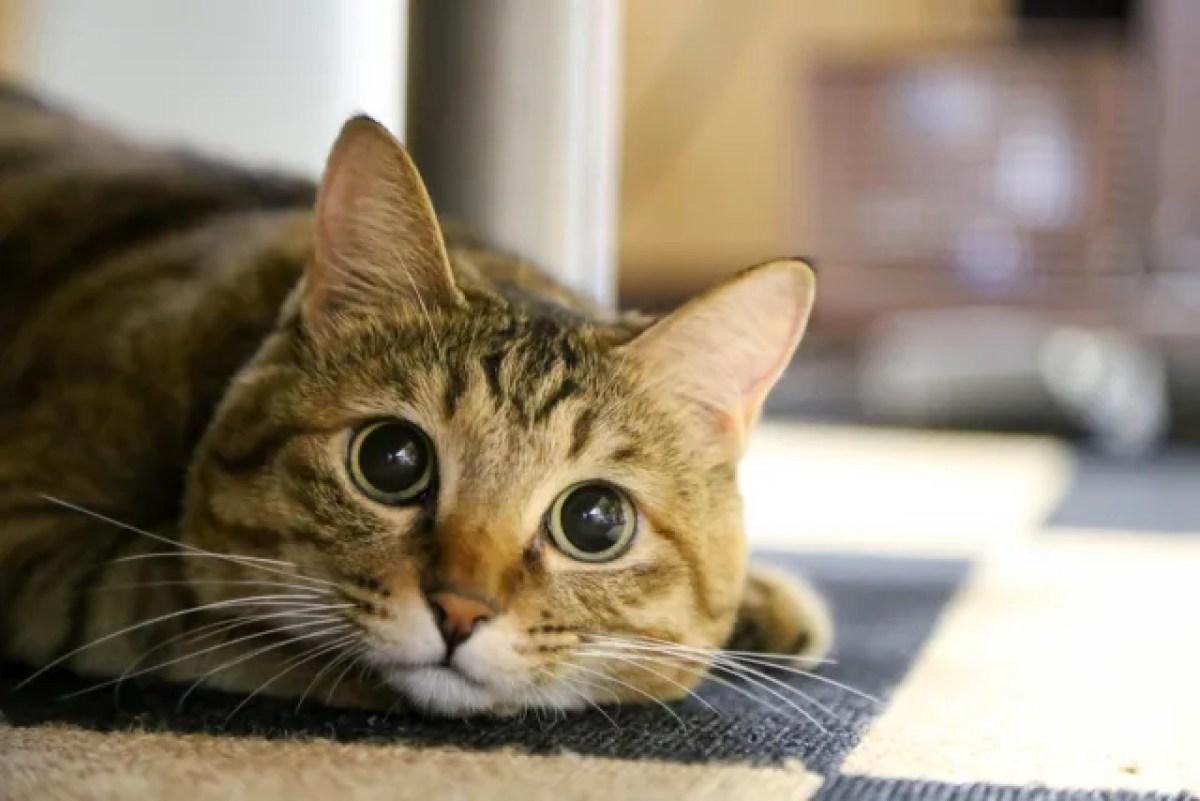 猫 見つめる 可愛い