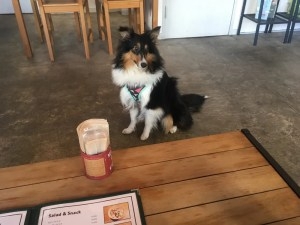 Dog Cafe ABCドッグカフェエービーシー