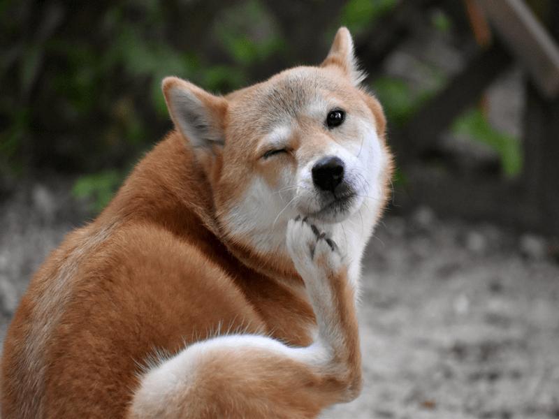 顔をかく犬