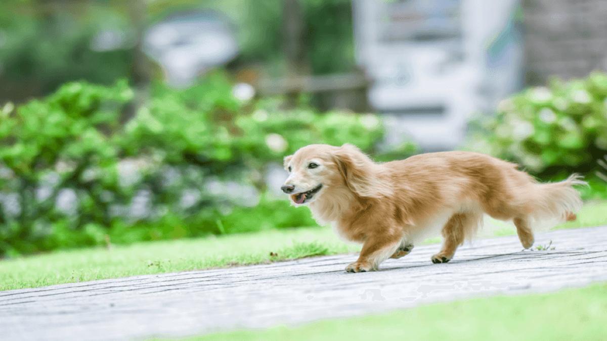外の道を走っている犬