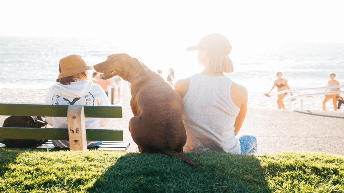 飼い主の隣に座り、海を眺める犬