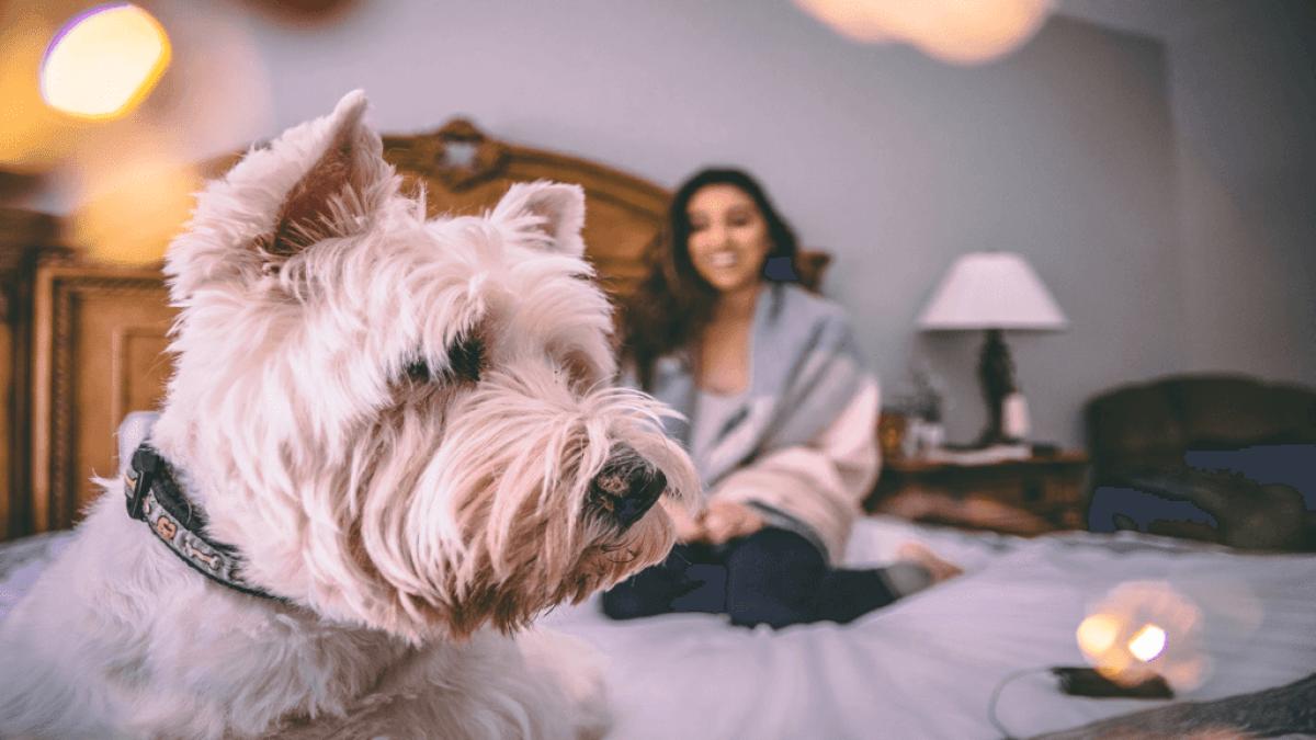 部屋のベッド前にいる犬