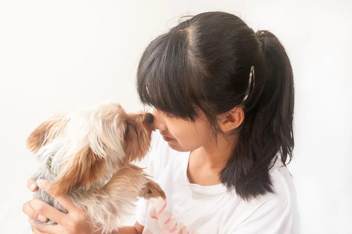 女の子と鼻をくっつけている犬
