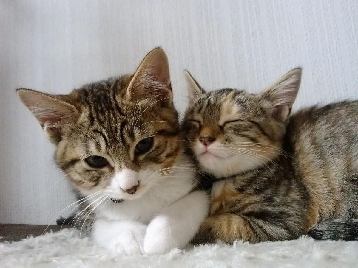 猫 二匹 甘える