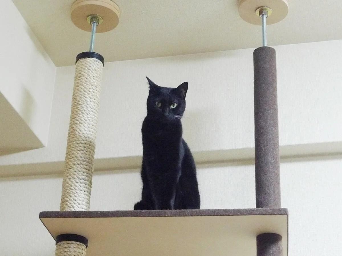 猫 キャットタワー 爪とぎ