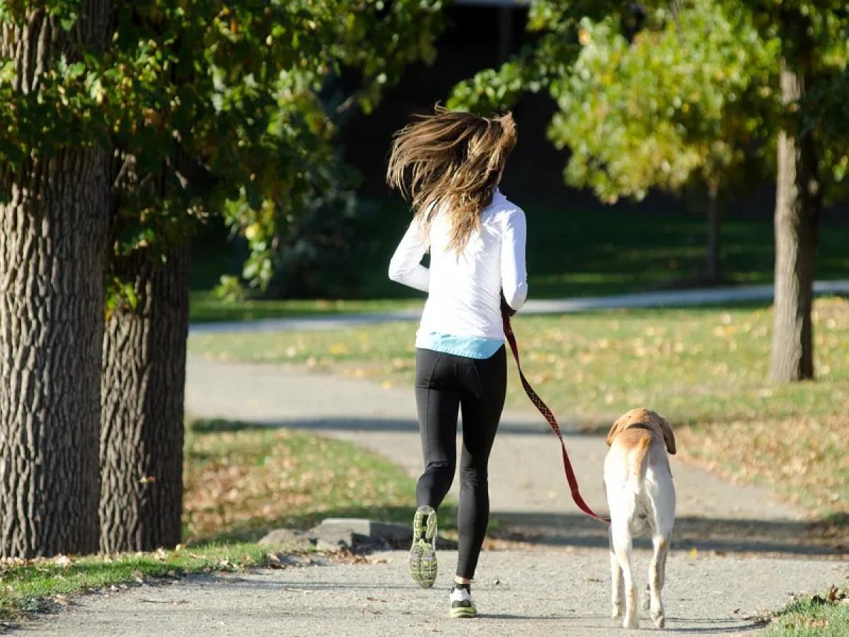 散歩している女性と犬