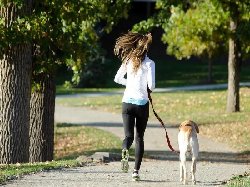 犬 散歩 飼う