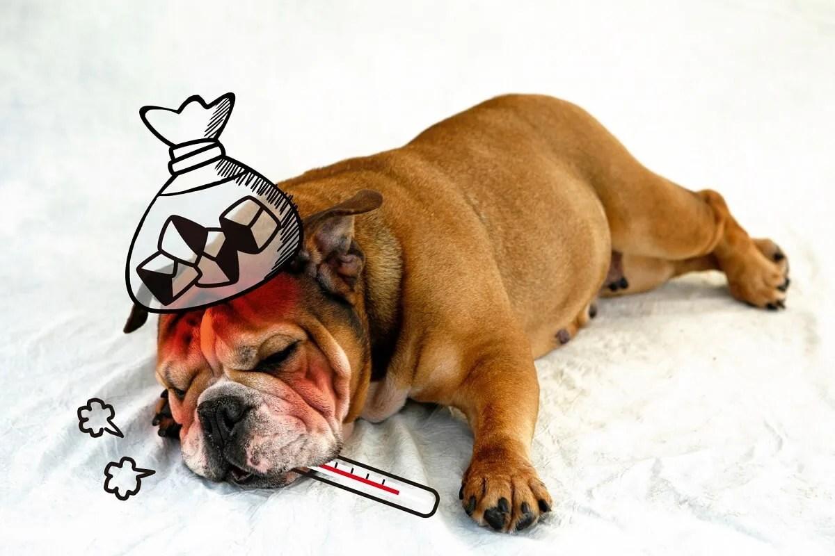 犬 病気 風邪