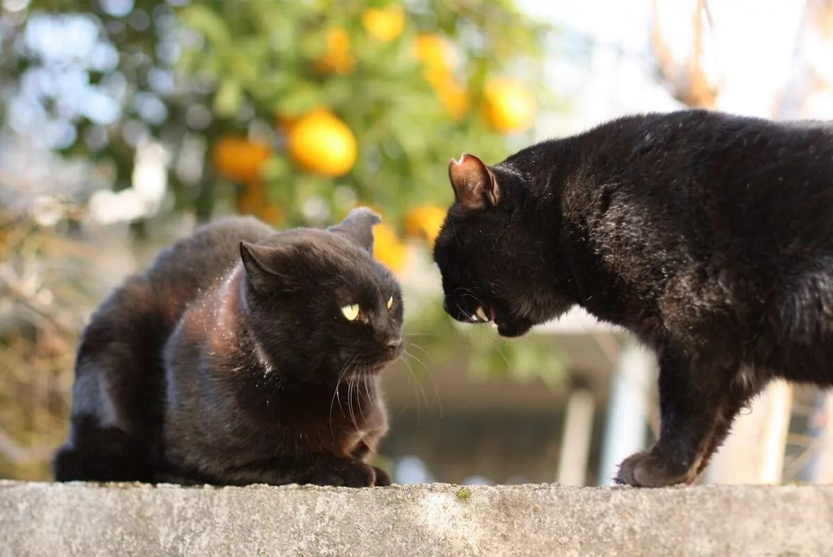 猫 挨拶 鳴く