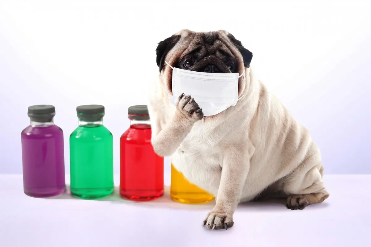 薬の前でマスクをしている犬