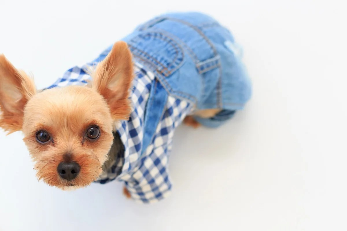 犬 服 オーバーオール