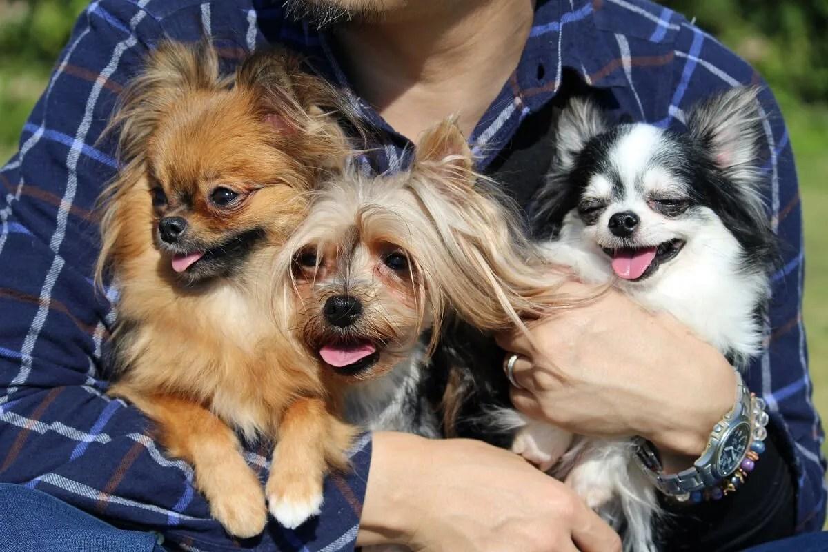 腕に抱えられている三匹の犬