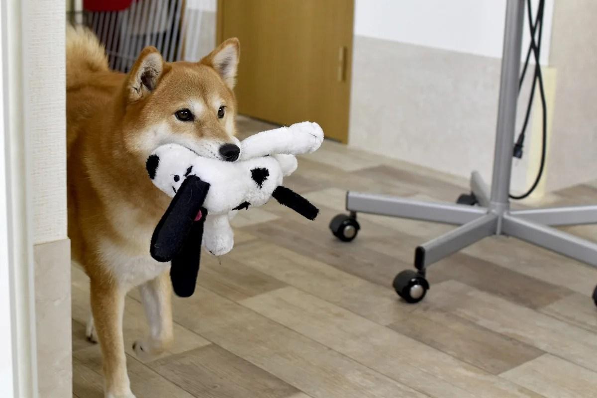 ぬいぐるみを抱えている犬