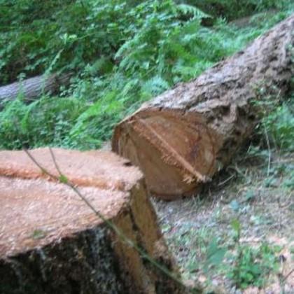 Incidente sul lavoro: muore nei boschi della Sila un 30enne di Cotronei