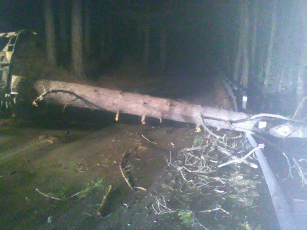 Abbattuti 25 alberi sulla Sp61 tra Cotronei e la Sila