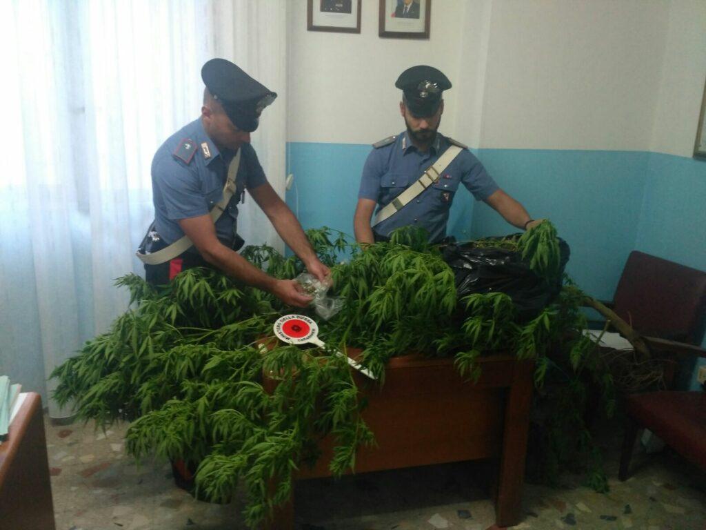 Altro blitz della Compagnia di Petilia: a Mesoraca coltivazione di marijuana