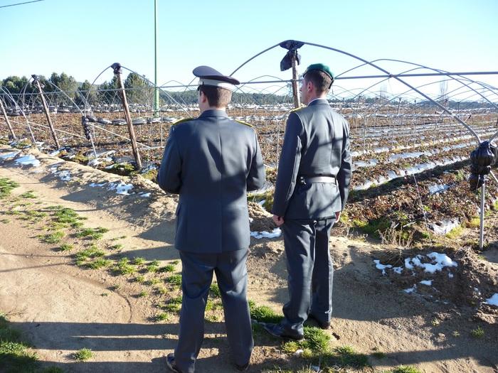 Segnalato imprenditore agricolo:truffa con danno erariale da 175 mila €uro