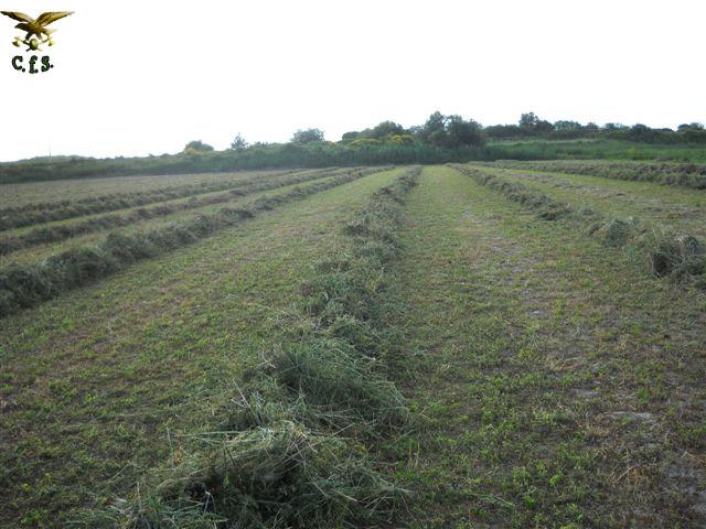 Occupato e coltivato abusivamente terreno demaniale  Due persone denunciate.