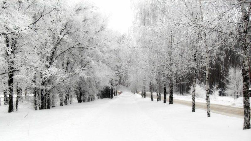 Si attende il gelo della notte, alcune scuole restano chiuse
