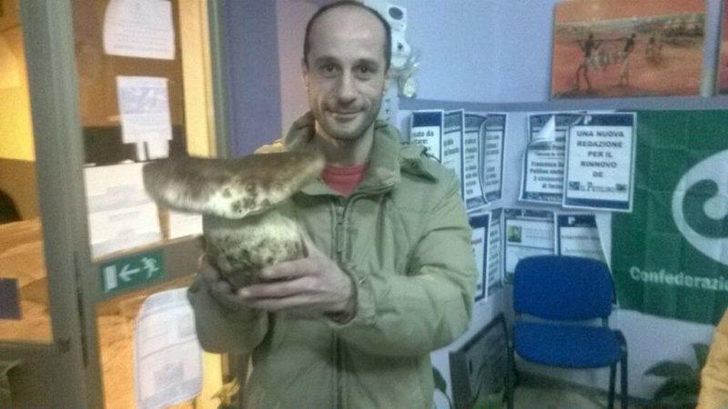 Trovato Porcino da 1,850 chilogrammi