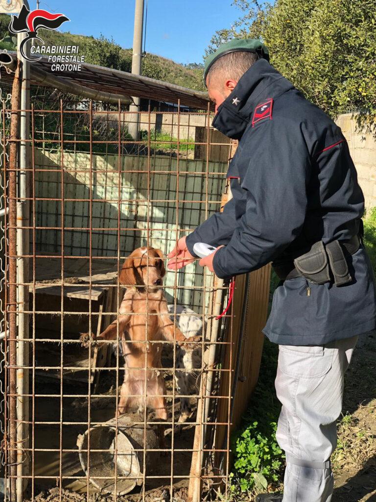 Denunciate due persone per maltrattamento animali