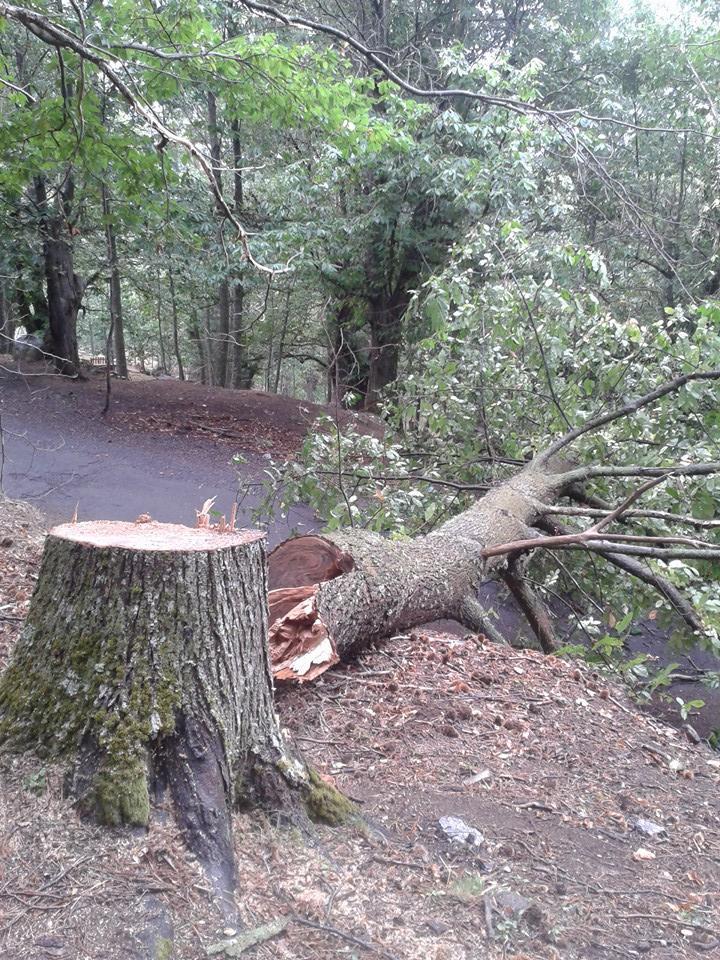 Il Parco Nazionale della Sila continua ad essere deturpato