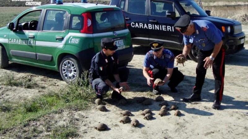 Detiene illegalmente 47 tartarughe di specie protetta: denunciato