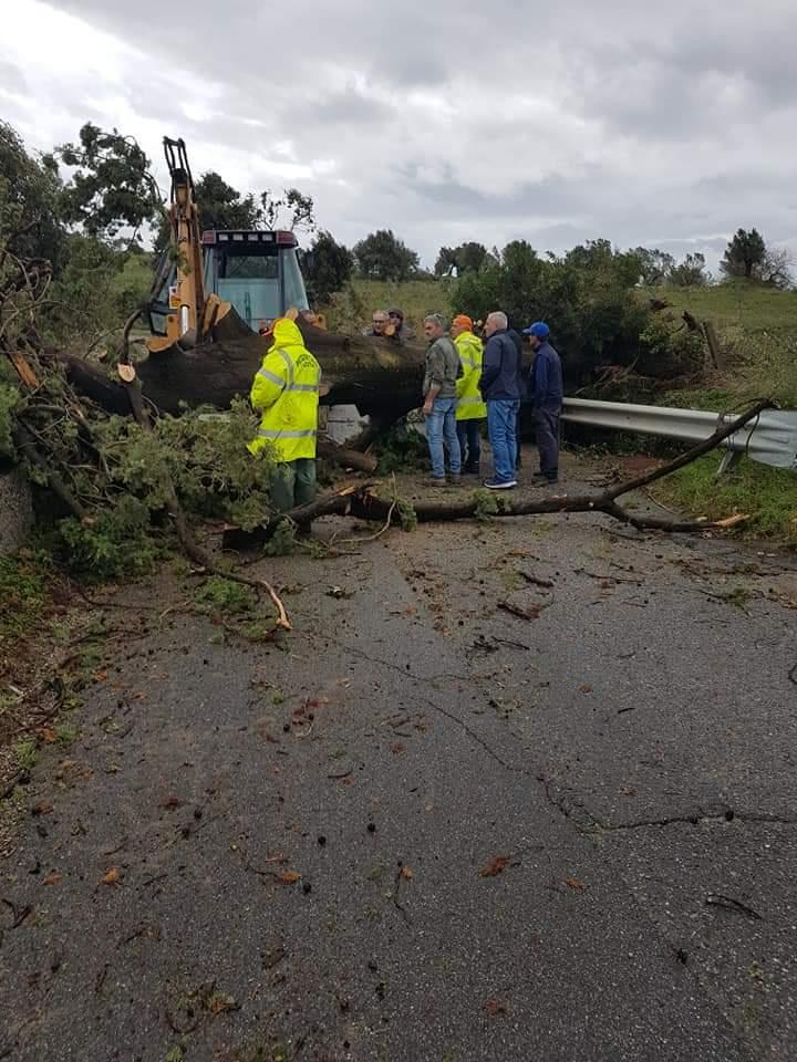 Alte precipitazioni nel bacino del Tacina, strade interrotte e alberi caduti