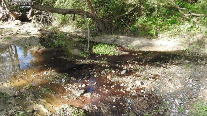 Reflui di mulitura sversati illegalmente in un fosso