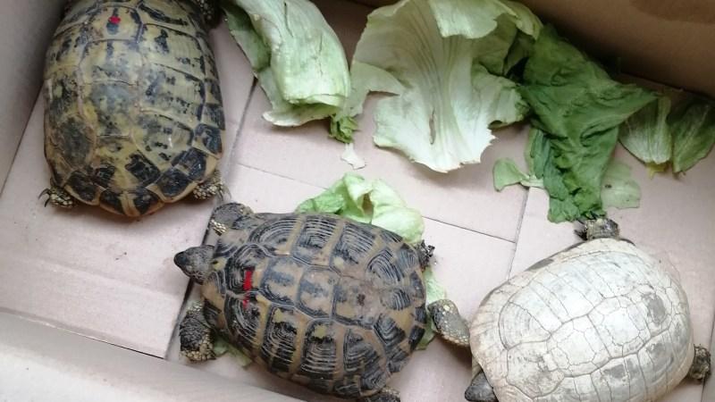 Detenzione illegale di tartarughe e vipere