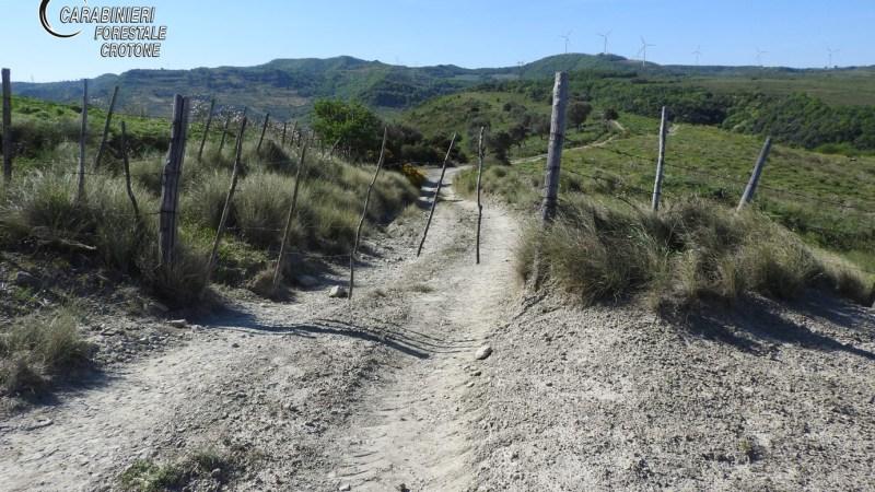 Sbarrate strade comunali per favorire il pascolo: 3 soggetti denunciati dai forestali