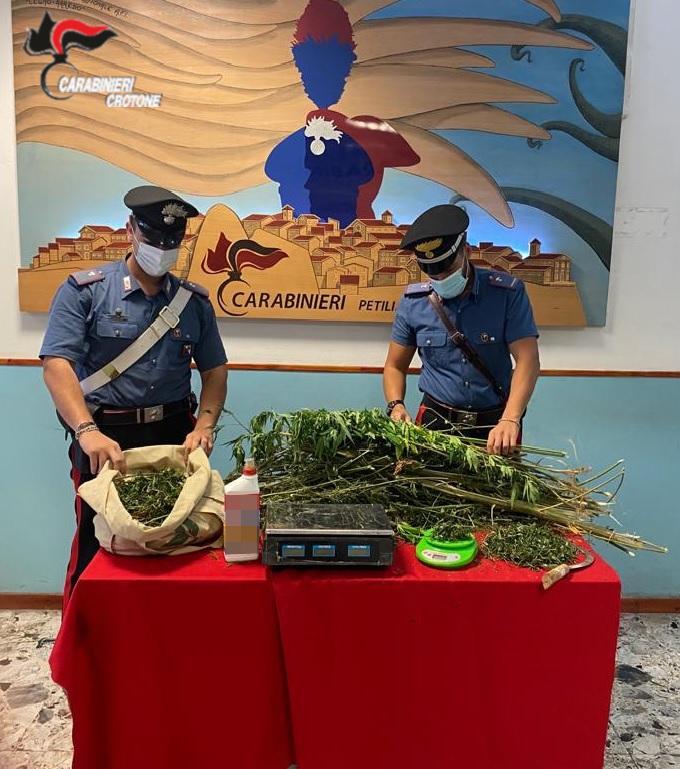 Sorpreso a coltivare marijuana: Arrestato 24enne
