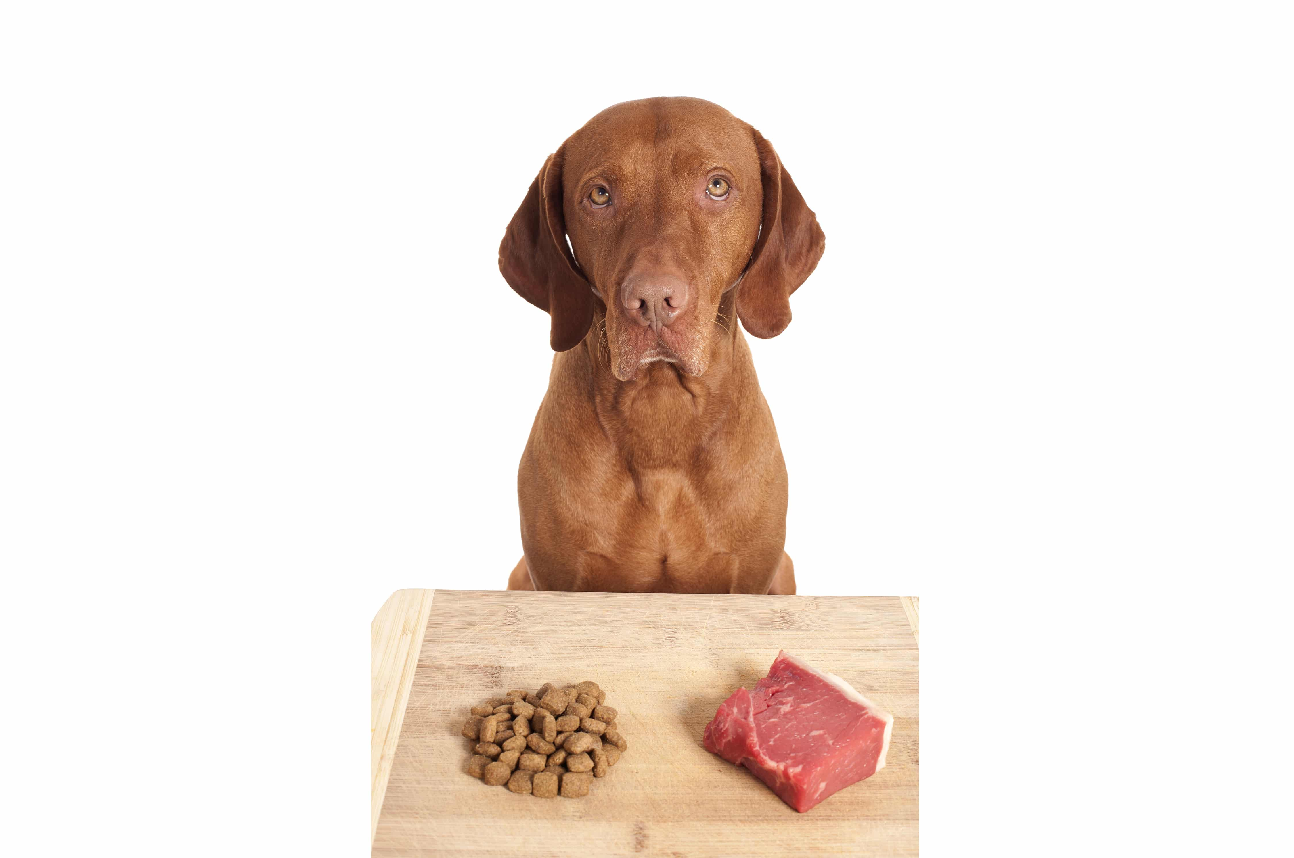 raw dog food diet